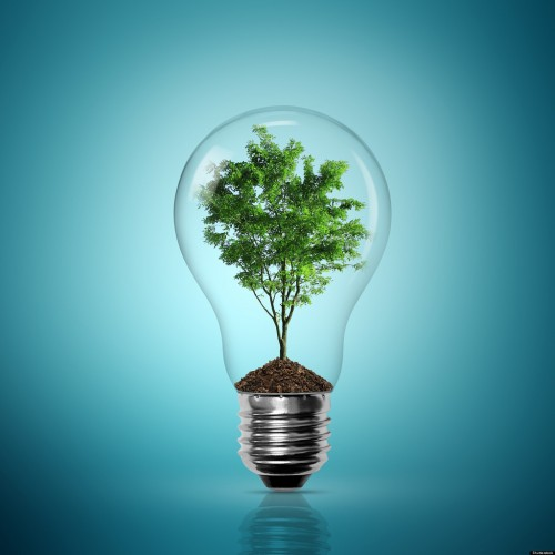 Huge Business Success: Image is light bulb w/ tree inside.