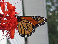 Leadership People Skills Image is monarch butterfly.