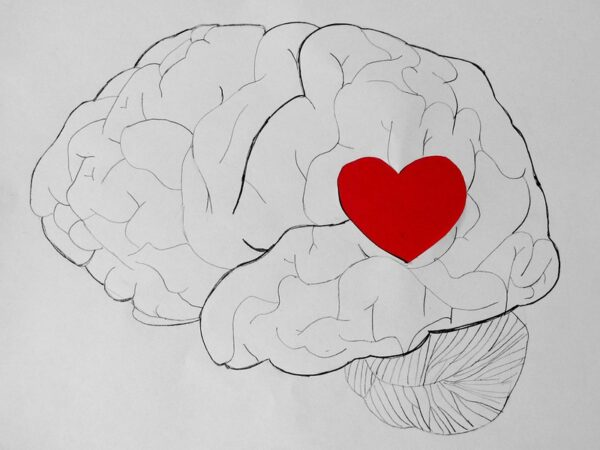 Decision Making Emotions: Image is brain w/ heart shape embedded in it.
