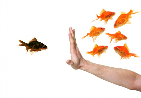 Reverse Hostile Workplace: Image is one fish of different color from the rest & hand stopping it.