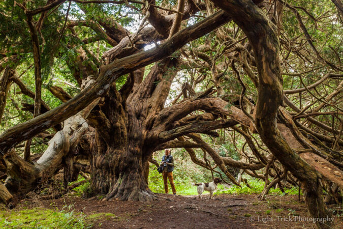 Show Emotional Intelligence: Image is large tree w/ many branches.