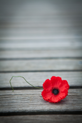 Human Connection: Image is a poppy flower.