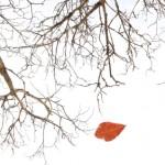 Teamwork People Skills: Image id Dying Tree