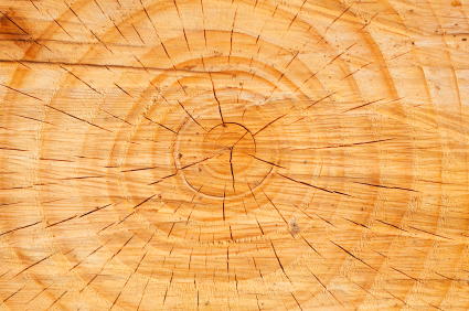 Team Building Across Generations: Image is cross section of tree trunk.