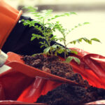 Powerful Relationship Lessons: Image is a seedling tree being planted